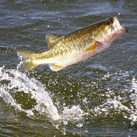 freshwater fishing tips - tips on how to fish in freshwater, Hard Baits