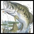 Photo of a Largemouth Bass