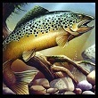 Photo of Trout Fish