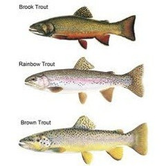 Different Types of Trout Fishing