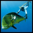 Photo of Spearfishing
